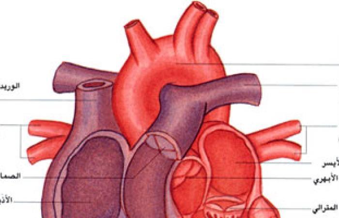 العادات السيئة تعرضك للإصابة بأمراض القلب