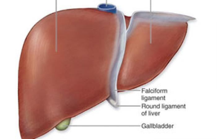 المياه الغازية والوجبات السريعة تؤدى لحدوث تدهن الكبد ومضاعفاته