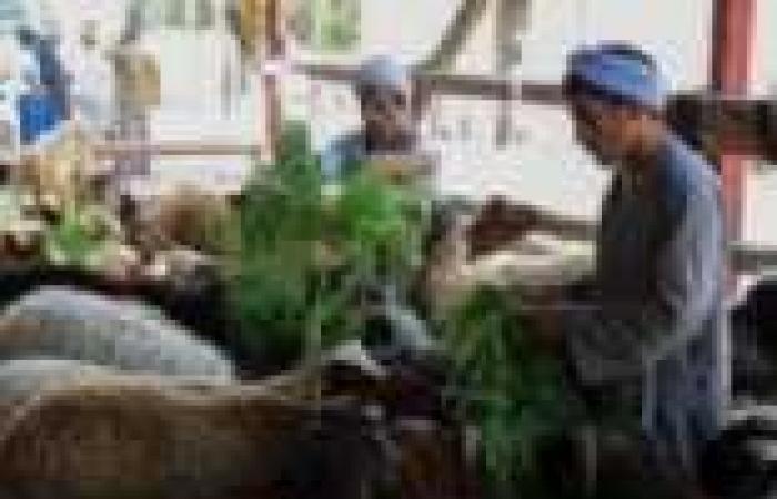 """""""الطب البيطري"""": القليوبية خالية من الحمى القلاعية"""