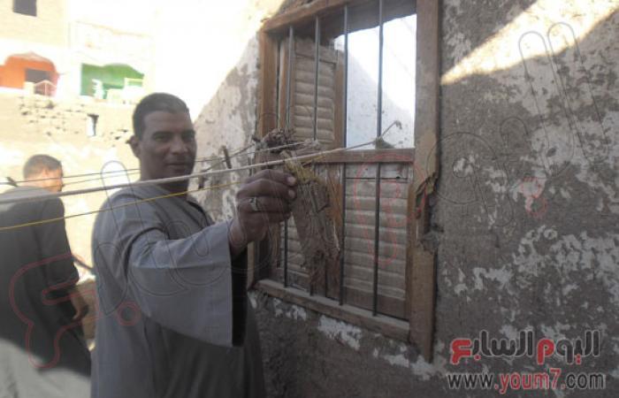 بالفيديو والصور.. النمل الأبيض يهاجم منازل قرية العديسات بالأقصر