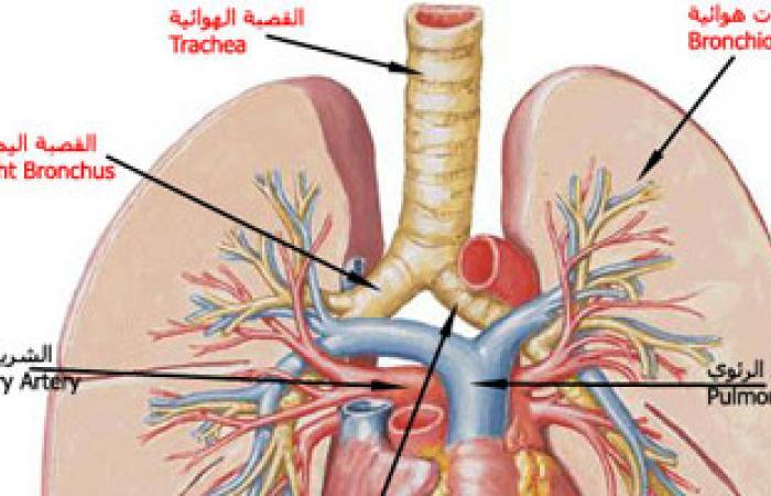علماء: الفيروس التاجى المسبب لمتلازمة الجهاز التنفسى مرض يصيب الإبل