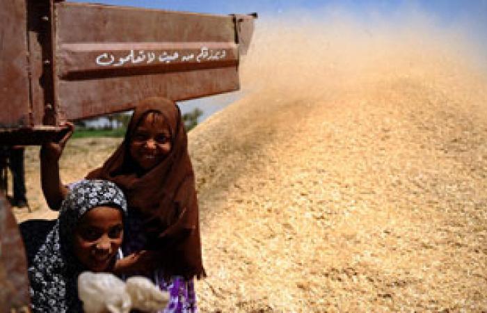 مصر تشترى 120 ألف طن من القمح الرومانى والروسى