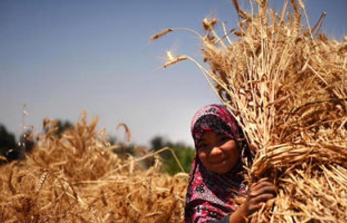 مصر تشترى 535 ألف طن من القمح من أوكرانيا وروسيا ورومانيا وفرنسا