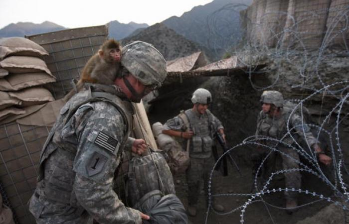إذاعة روسية: واشنطن استخدمت حيوانات بحرب العراق والمغرب دعمتها بـ9000 قرد