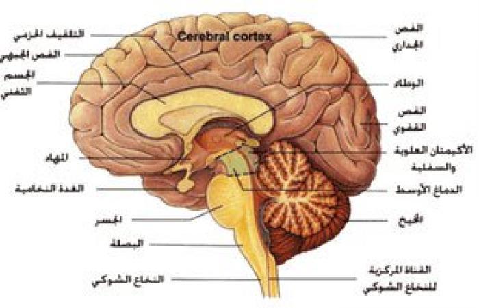 علماء أمريكيون: المخ يدخل فى صمت عندما نتحدث بصوت عالٍ