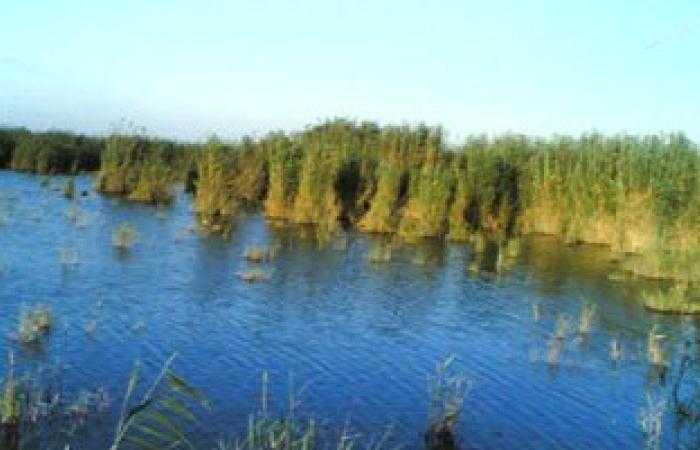 الثروة السمكية تدفع بكراكة جديدة للعمل فى بحيرة البرلس