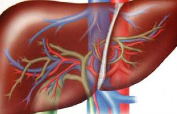 أسباب الإصابة بالتليف الكبدى.. والأطعمة المفيدة والضارة للمريض