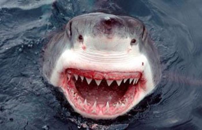 مصرع ألمانى الجنسية هاجمته سمكة قرش فى مرسى علم