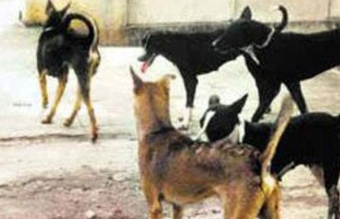 كلب ضال يعقر 11 شخصا بالسنبلاوين