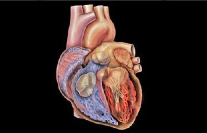 تعدد الزوجات يضاعف احتمالات إصابتك بأمراض القلب 5 مرات