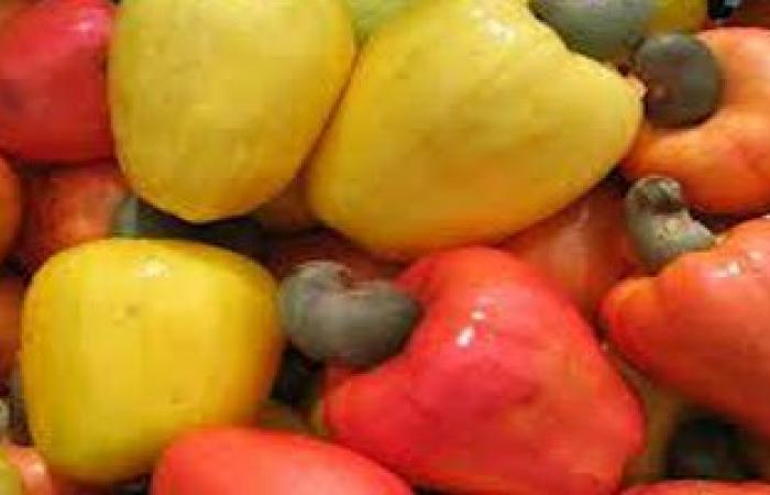 210 ملايين دولار إجمالى صادرات الإسماعيلية من الخضر والفاكهة والمحاصيل