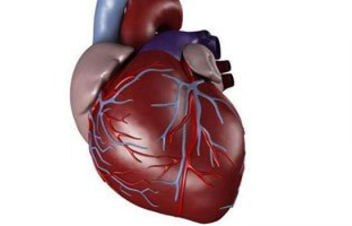 """إنزيم """"q-10"""" الموجود فى أنسجة جسم الإنسان يحمى القلب"""