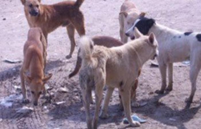 لجنة مكبرة للتخلص من الكلاب الضالة بالقليوبية