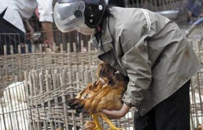الطب البيطرى: لا توجد حالات إصابة بأنفلونزا الطيور بالقليوبية