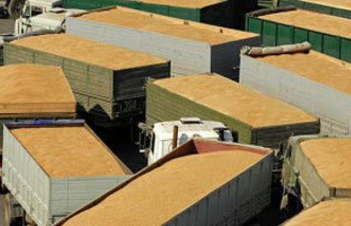 """مصدر بـ""""الزراعة"""": الحكومة تدرس إلغاء قرار شراء القمح المحلى بالسعر العالمى"""