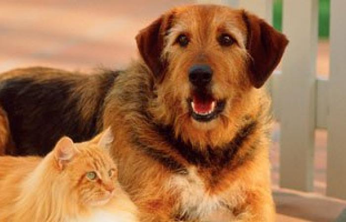 """الزراعة: اعتماد معمل لإصدار شهادات صحية لـ""""الكلاب والقطط"""""""