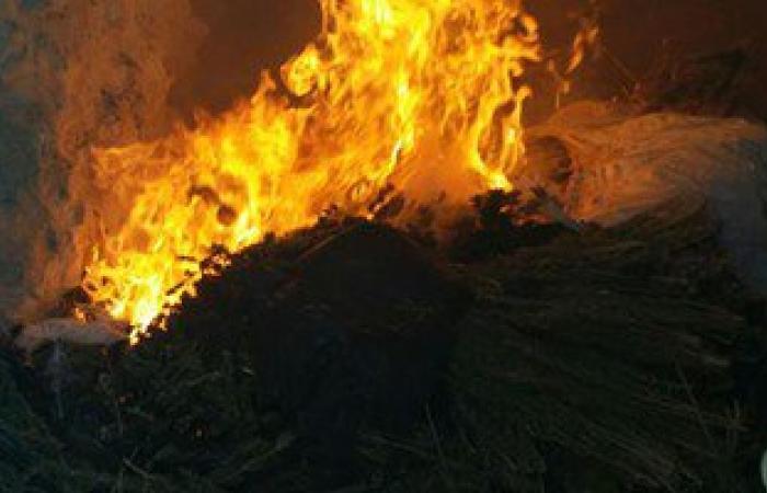 بالصور.. ضبط وحرق 4 مزارع نباتات مخدرة بشمال سيناء