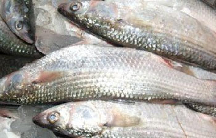 تعرفى على أطعمة علاج خشونة الركبة.. أهمها السمك والبصل