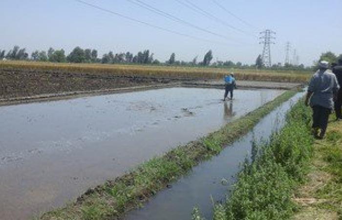 """""""الرى"""" تحذر من أزمة مائية كبيرة بسبب ارتفاع سعر الأرز.. اقرأ التفاصيل"""