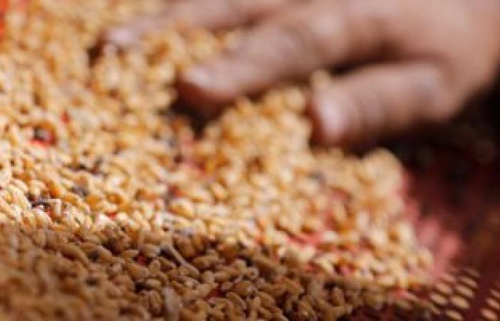 """""""تقصى حقائق البرلمان"""" تنضم إلى لجنة استلام توريد القمح للموسم الجديد"""