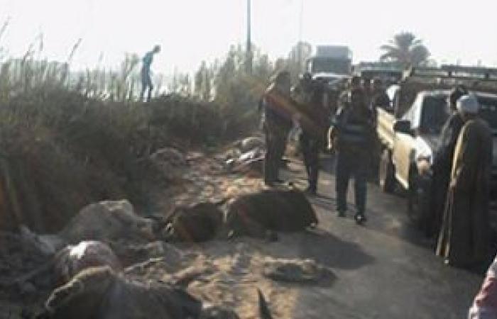 بالصور.. القبض على 4 أشخاص متلبسين أثناء سلخ 18 حمارا بالبحيرة