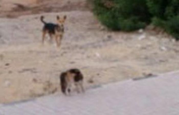 ذعر بعزبة حمد بالمحلة بعد هجوم كلب ضال على الأهالى وعقر 10 أشخاص