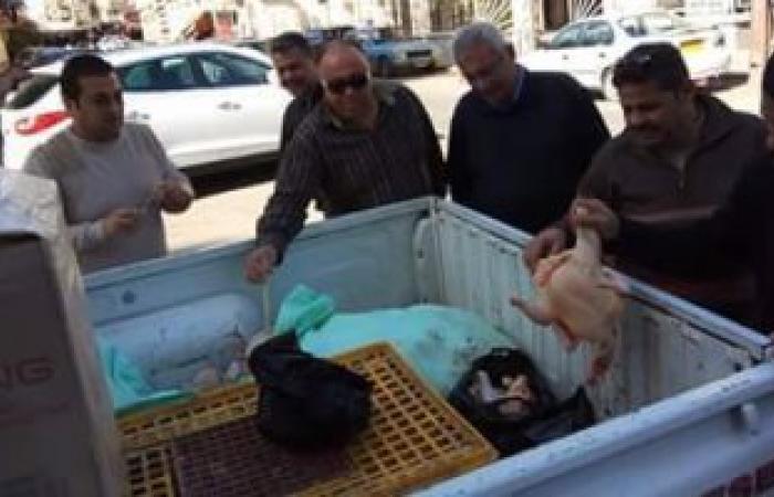 بالصور.. ضبط ٢٠٠ كيلو دواجن محقونة بالمياه لغش المواطنين ببورسعيد