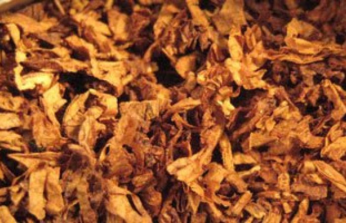 الجمعية الأمريكية لعلاج التدخين: عمال مصانع التبغ الأكثر عرضة للسرطان