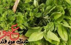 نباتات وأطعمة تعالج ظهور الشيخوخة وتجدد خلايا المخ حتي 11 عاماً وتمنع ظهور الزهايمر