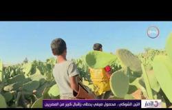 الأخبار - التين الشوكي .. محصول صيفي يحظى بإقبال كبير من المصريين