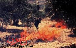 تفاصيل ... السيطرة علي حريق هائل في الكويت