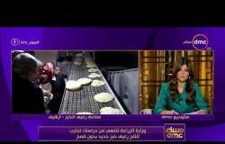 مساء dmc - وزارة الزراعة تنتهي من دراسات تجارب إنتاج رغيف خبز جديد بدون قمح