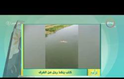 8 الصبح - الإعلامية أية الغرياني تعرض فيديو لـ ( كلب ينقذ رجل من الغرق )