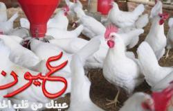 اسعار الدواجن اليوم الأثنين 8 أبريل 2019 في مصر
