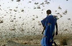 الأردن خال من الجراد و«الزراعة» توقف عمليات البحث