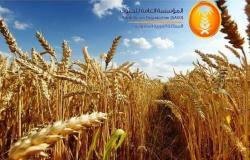 مؤسسة الحبوب:شراء 10%من احتياجات القمح السنوية من شركات سعودية بالخارج