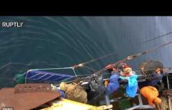 """روسيا تطلق سراح 19 حوتا من فصيلة """"البيلوغا"""" في بحر اليابان"""