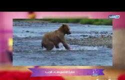 معلومة سكر   معلومات مفيدة جدا عن الدب