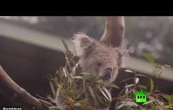 شاهد كيف تحتفل الحيوانات بهطول الأمطار في أستراليا