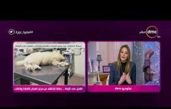 السفيرة عزيزة - اطمن على أليفك .. حملة للكشف عن مرض السكر للقطط والكلاب