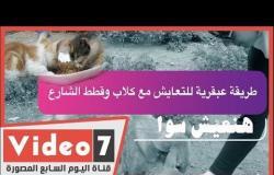 مواسير مزينة وملونة في الشوارع لإطعام القطط والكلاب.. الرحمة على الطريقة المصرية