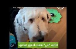كلب يعبر عن رغبته بلغة بشرية