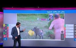 لماذا طارد رجل كهل عار خنزيرا بريا في ألمانيا؟