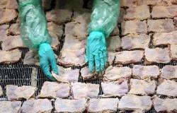 الصين: اكتشاف كورونا بأجنحة دجاج مُجمّدة.. وتحذير من الأغذية المستوردة