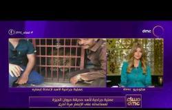 مساء dmc - عملية جراحية لأسد حديقة حيوان بالجيزة لمساعدته على الإبصار مرة أخرى