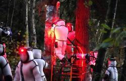 """فيديو.. معركة لإخلاء شجرة من """"الدبابير القاتلة"""" في أمريكا"""