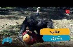 رامز جلال وشر عذاب لـ بشري
