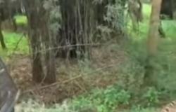 بالفيديو.. شاهد ما فعله نمر بسيارة جيب وركابها