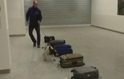 """بحث بلجيكي: الكلاب تستطيع تحديد المصابين بـ""""كورونا"""" بواسطة الشم"""