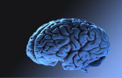 اكتشاف نظام غذائي يحافظ على قوتك الذهنية في سنواتك الذهبية.. تعرَّف عليه